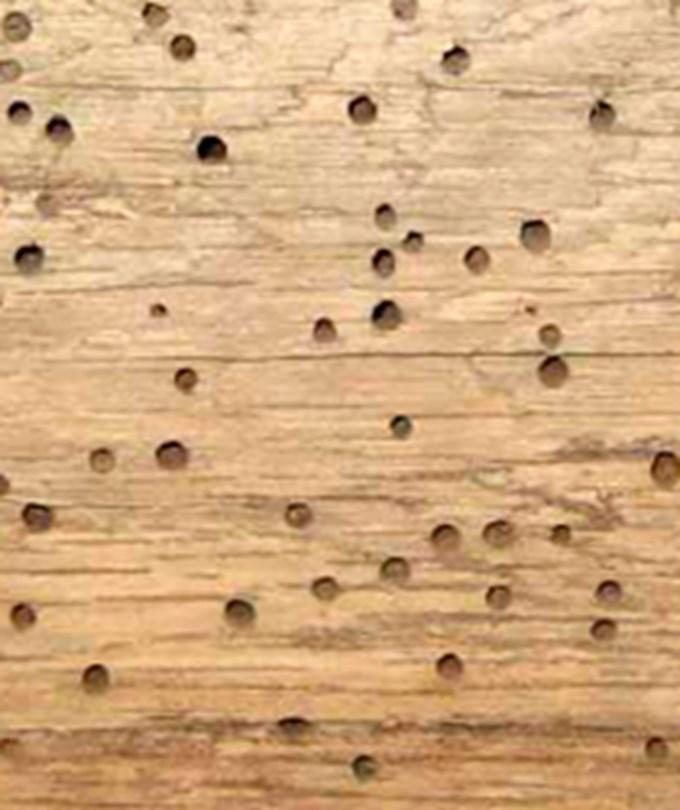 reparación vigas de madera
